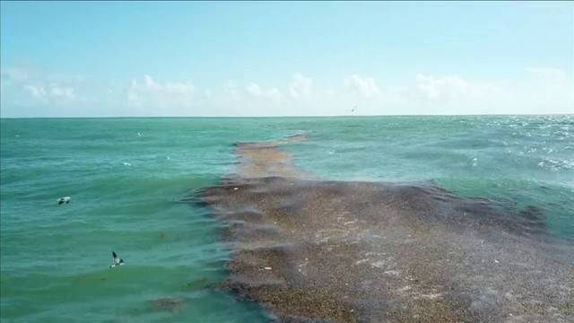 Noaa Red Tide Could Linger On Florida S Atlantic Coast Through Next Week