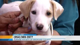 Adopt a pet: Meet Clay