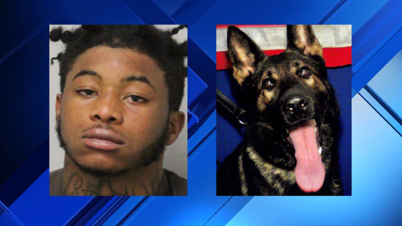 JSO booking photo of Jhamel Paskel and photo of JSO K-9 Fang