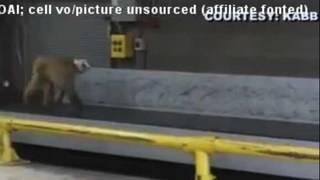 Monkey escapes cage at San Antonio airport