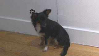 Adoptable pets on display at Neiman Marcus