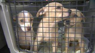 More animals from Puerto Rico brought to South Florida after surviving&hellip&#x3b;