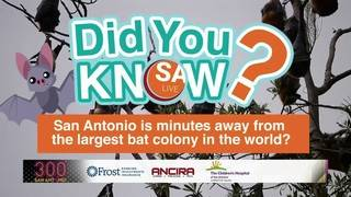 DYK: San Antonio is minutes away from the LARGEST bat colony in the world?