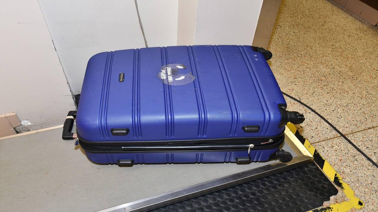 Ollie Suitcase_1507669709290.jpg