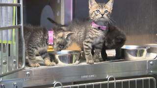 Animal Care Services seeks donations to help care for puppies, kittens