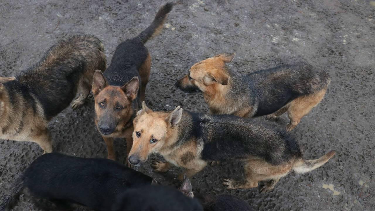 georgia neglected german shepherds 3_1546885970954.jpg.jpg