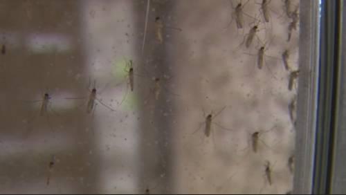 Texas Children's Hospital testing children for chikungunya