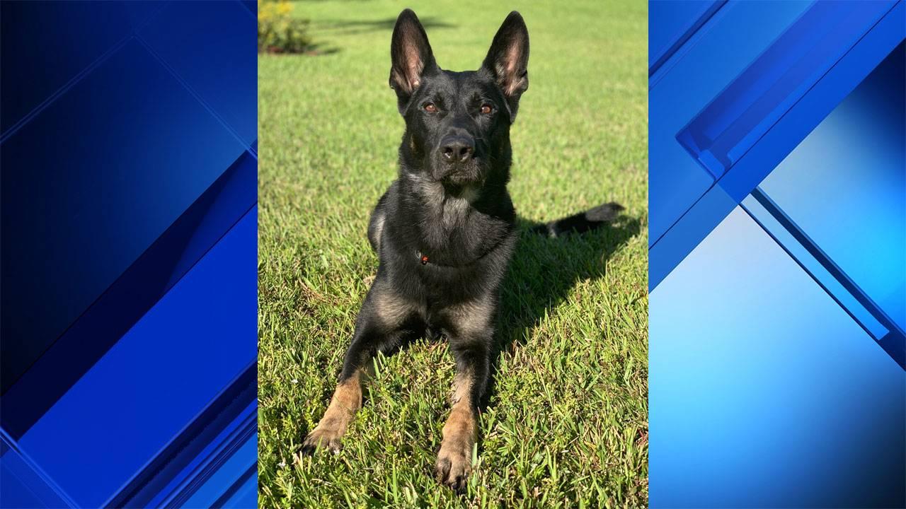 Cigo police dog killed in shooting