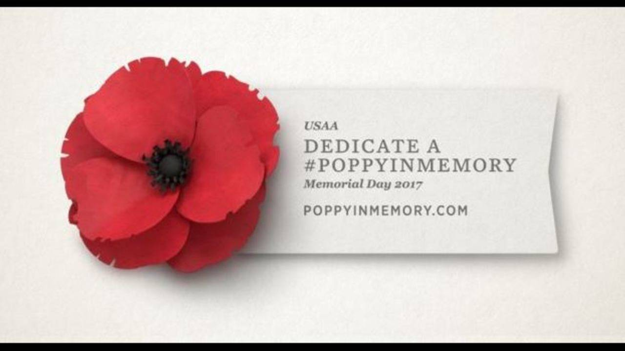 Poppy Flower Is Important Symbol To Honor Military In May