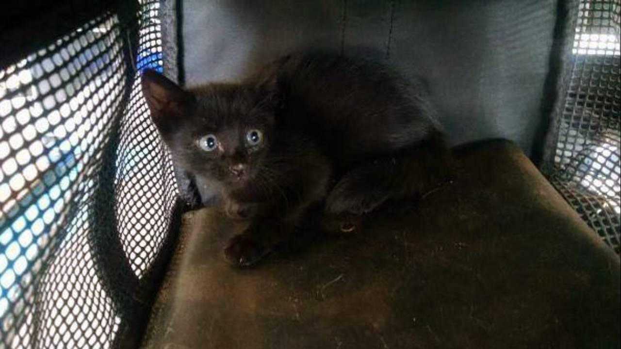 Kitten-rescue-2_1472244393275.jpg