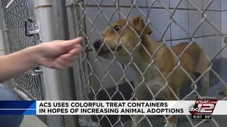 ACS uses colorful treat containers in kennels in hopes of increasing&hellip&#x3b;