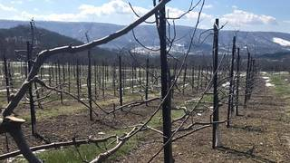 Owner of Giles County apple orchard preparing for winter weather