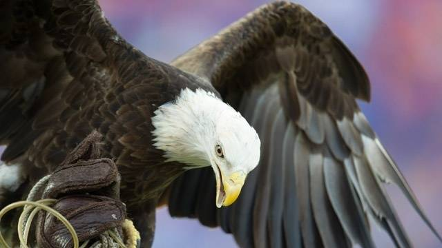 Eagle lands on Mariners pitcher before Twins home opener