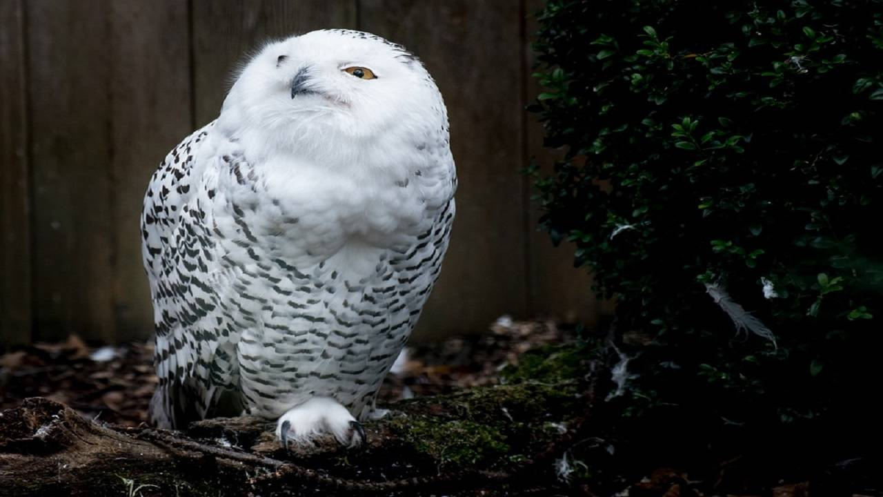 owl_1539359070431.jpg