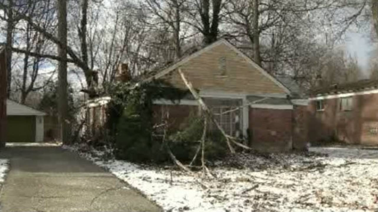 Tree on home_18239568