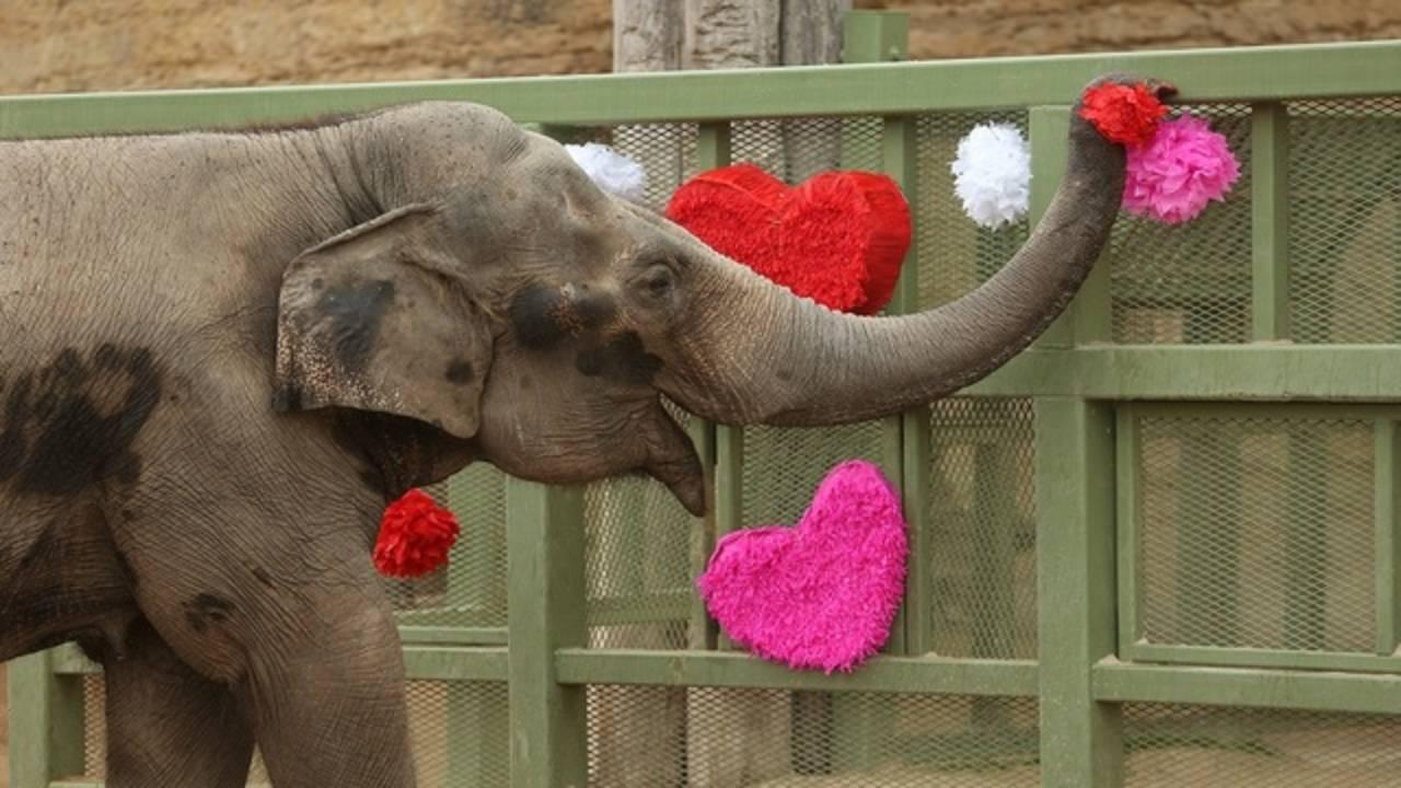 San-Antonio-Zoo-Elephant-2