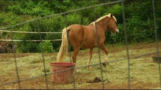 Local nonprofit loses its prized horses in fire